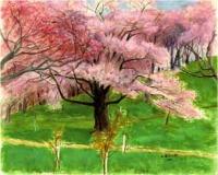 五鹿山の桜